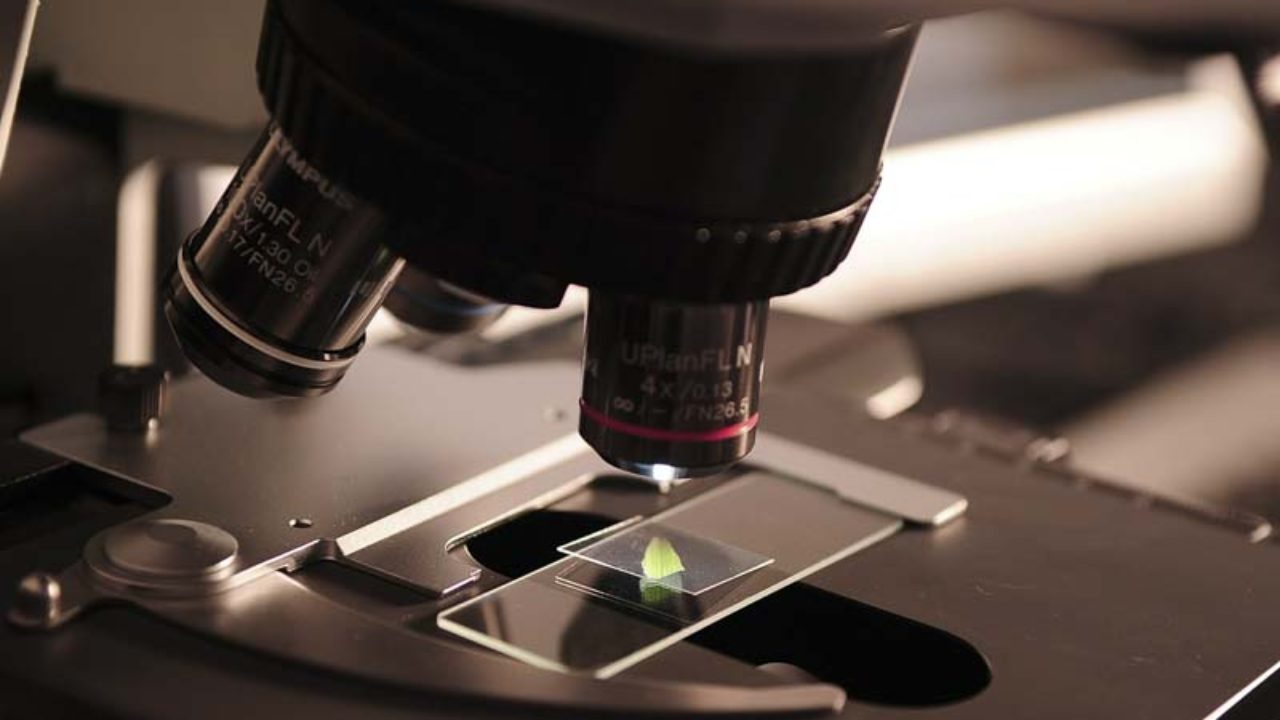The most important Characteristics of the Microscope