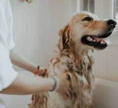 Training Tips for Students-Dog Owners